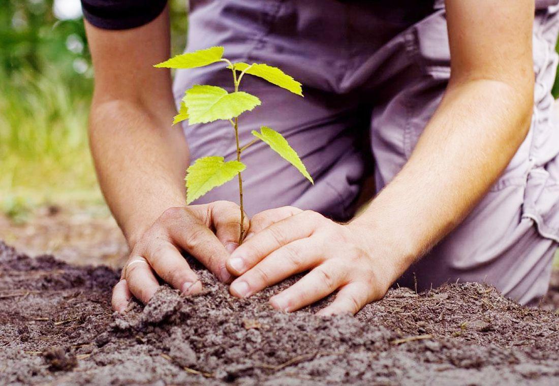 https://www.ecologiaverde.com/consejos-para-la-plantacion-de-un-arbol-493.html