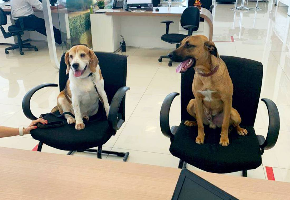 tucson prime perro, hyundai perro adoptado, perro adoptado por hyundai, tucson prime perro hyundai, historia del perro tucson prime, perro adoptado por concesionario hyundai, perro callejero adoptado, historias de perros callejeros adoptados