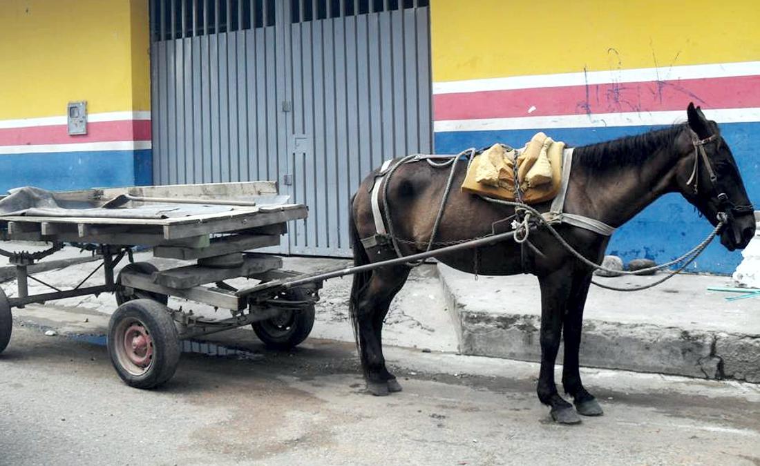 vehiculos de traccion animal, prohibicion vehiculos de traccion animal, vehiculos de traccion animal colombia, prohibicion vehiculos de traccion animal en colombia, plazo para prohibir vehiculos de traccion animal en colombia, coches de caballos en cartagena